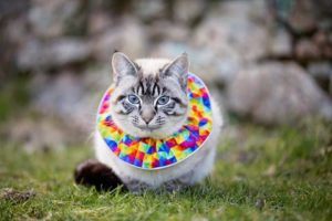 Collier multicolore pour chat