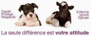 chien-vache la seule différence est votre attitude