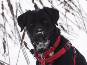 chien végétalien dans la neige