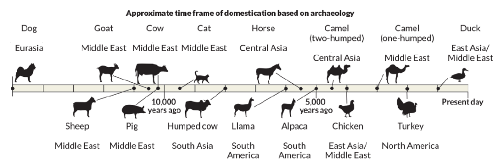 Animal Domestication Timeline