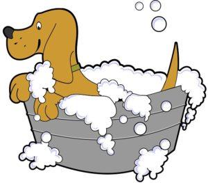 chien bain