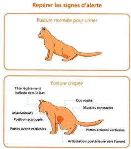 Signes d'alerte de problèmes urinaires chez le chat