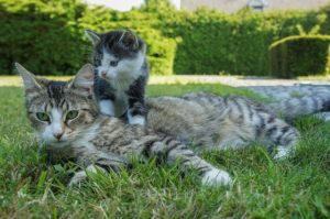 Chatte et son chaton