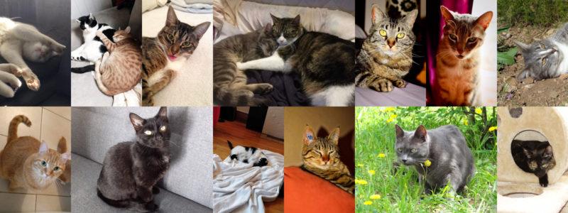 Chats et chiens végétaliens - vegan